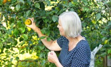Andere Konsultationsservices Verstopfung Frau pflückt Obst
