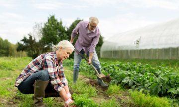 Douleur douleurs musculaires homme femme jardinage