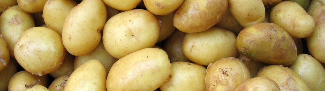Potatisen: nyttig eller gör den dig tjock?