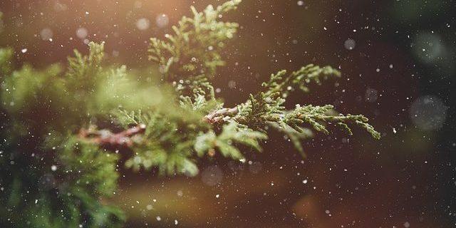 Weihnachtsbaum-Allergie gibt es denn das?