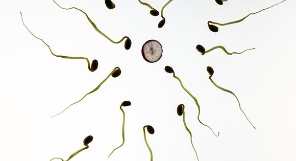 Abortuspil via de huisarts