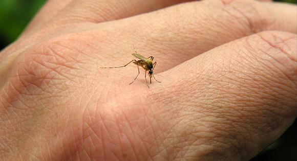 Muggenbeet, weg met die jeuk!