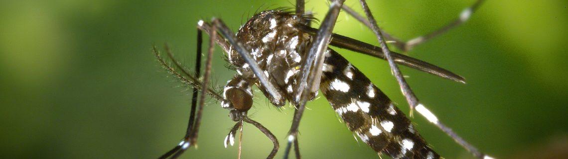 Tips vid kliande myggbett